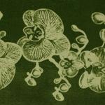 Орхидея 160